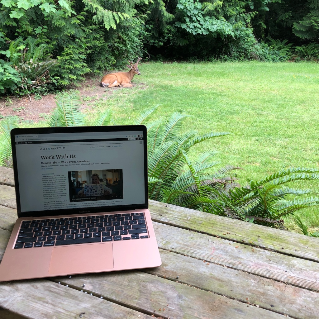 A young buck with velvet horns laying down on a green lawn near a Western redcedar tree line. Sword ferns and a laptop appear in the foreground.